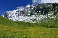 スイス グロッセ・シャイデック付近のお花畑