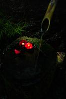 三重県 赤目四十八滝 落椿
