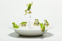 皿からジャンプしている一匹のアマガエル