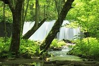 青森県 銚子大滝