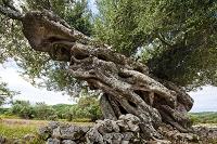 ギリシャ イオニア諸島