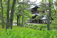 京都府 茶の生垣の建仁寺