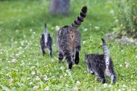 庭の中を歩く猫の親子
