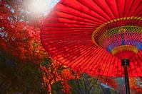 京都府 野点傘と秋