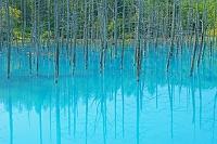 北海道 美瑛の青い池