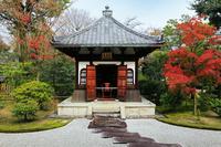 京都府  京都市 秋の建仁寺の庭