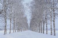 北海道 雪の一本道