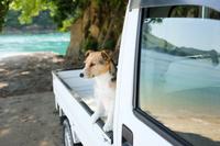 車に乗る犬