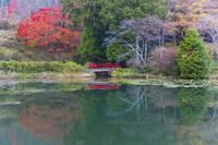 紅葉の鳥見山公園