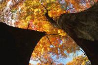 北海道 紅葉 月寒公園