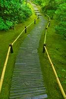京都府 大河内山荘(大河内傳次郎の別邸) ミドリの小道