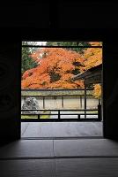 京都府 常照皇寺 方丈から見る紅葉と土塀
