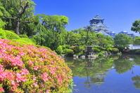 大阪府 春の大阪城
