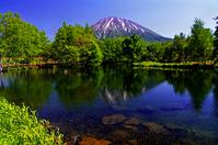 北海道 羊蹄姿見の池と新緑の木々