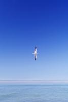 北海道 海と一羽のカモメ