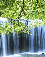 鍋ヶ滝と新緑