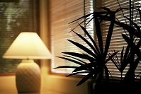 窓際の観葉植物