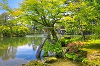 石川県 新緑の兼六園 虹橋と徽軫灯籠