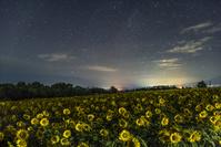 山梨県 ヒマワリ畑と星空
