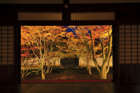 京都府 妙覚寺 方丈から見る法姿園の紅葉ライトアップ