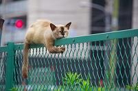名古屋の猫
