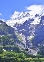スイス フィッシャーホルン