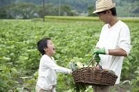 畑の中で収穫した作物を持つ父と男の子