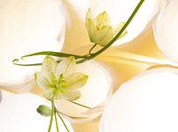 フラワーバリエーション(Paper & Flower)