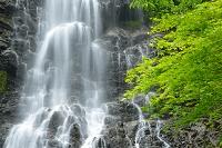 兵庫県 養父市 新緑の天滝