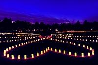 奈良県  奈良公園 夜景