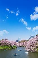 東京都 桜満開の千鳥ヶ淵