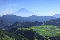静岡県 静岡市 清水吉原 富士山と茶畑