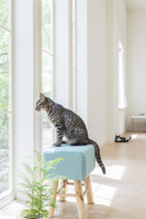 窓辺の椅子に座る猫
