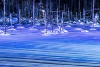 北海道 美瑛町 雪の青い池