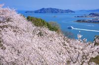 広島県 桜咲く音戸の瀬戸公園より瀬戸内海と情島