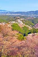 奈良県 吉野山 桜