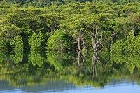 沖縄県 船浦湾 マングローブ林 西表島