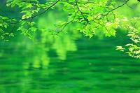 新潟県 津南町 初夏の竜ヶ窪池