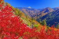 長野県 紅葉の下栗の里より南アルプス