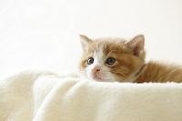 仔猫の顔のアップ