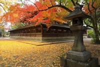 京都府 上御霊神社の紅葉