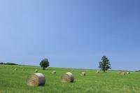 北海道 牧草ロールと草原