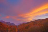 長野県 朝焼けの分杭峠より高遠方向の山並みと紅葉のカラマツ林