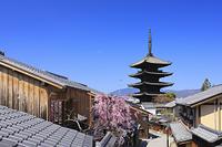 京都府 桜咲く八坂道の家並みと八坂の塔