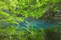 山形県 新緑の丸池様