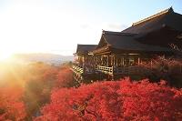 日本 京都府 清水寺 夕日に染まる本堂舞台と紅葉