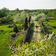 スウェーデン 乗馬