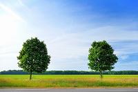 一本の道と可愛い並木