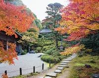 京都府 金福寺 庭園