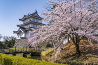 埼玉県 桜咲く忍城